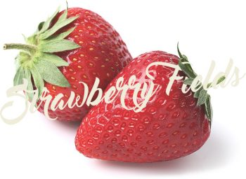 aardbeien strawberry fields